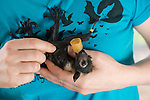 Ashleigh Johnson, volunteer wildlife carer at Tolga Bat Hospital takes care of a baby flying fox bub.
