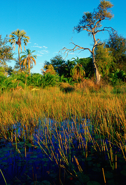 Okavango Delta, Botswana, Africa.