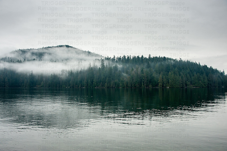 Landscape of trees and fog reflecting in the ocean on a winters day.