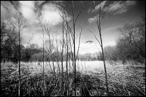 Stems, Thorndon Woodland, Suffolk by Paul Cooklin