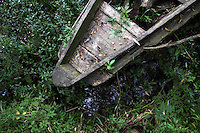 An old discarded boat in the Xixi wetlands which lie in the west of the city of Hangzhou. This is China's 'first national wetland park,' dubbed as such to act as a role model to all other wetlands in China and to supposedly show how to effectively manage and restore wetlands, notably urban wetlands. Zhejiang Province. China. 2010