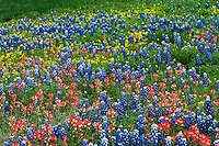 Texas Hill Country Flowers