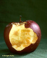 CX02-001a  Oxidation - apple oxidizing in air