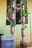 Hydroponic window growing system for growing indoors in small spaces ( adapted Window farm) at FoodShare Toronto.