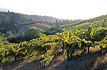 Diamond Mountain, Napa Valley