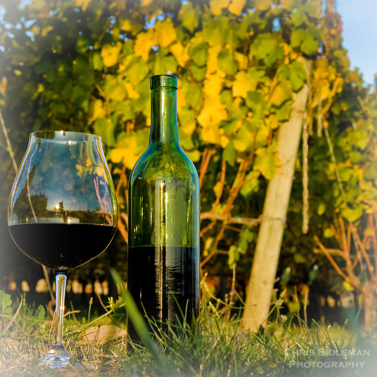 Wine glass and bottle in sitting on grass vineyard during Fall color with grapevines in background.