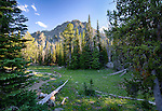 Idaho, North Central, Riggins, Nez Perce National Forest. A meadow in the Seven Devils Mountains in summer.