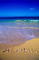 Aloha written with shells on Waimanalo beach