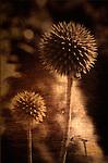 Botanicals Still Life