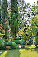 A well kept, landscaped garden with a lawn and tall conifers. Clipped topiary shrubs in terracotta pots are arranged the garden.