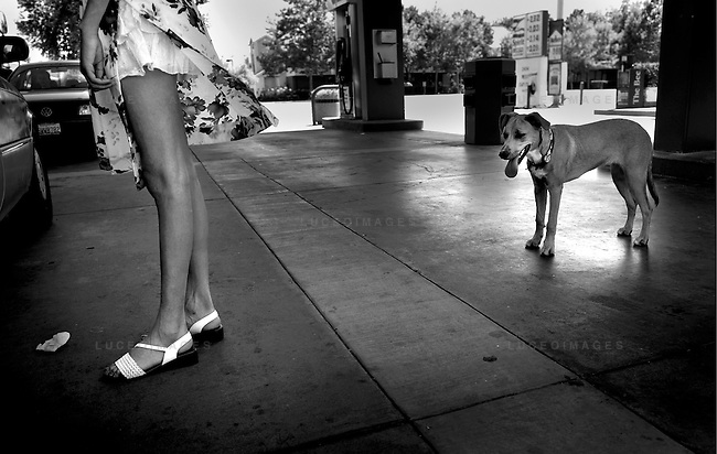 Diamond is hypnotized as the wind catches her owner's dress at a local gas station.