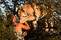 Botswana, Kalahari, Valentin Gruener  with a lioness he raised on a private reserve from a small dying cub to a healthy adult