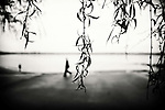 Branches of a weeping willow tree with blurred silhouetted people in the background.