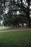 TREES - PLANTS<br /> Live Oaks w/Spanish Moss<br /> Savannah, GA