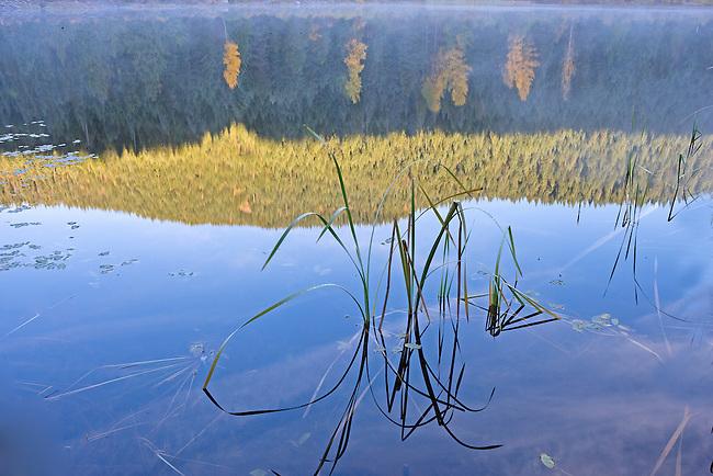 Reeds in Trillium Lake on Autumn Morning, Oregon