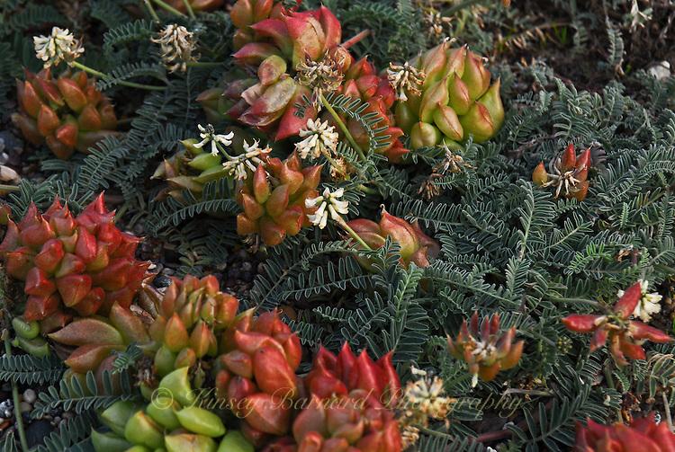 &quot;DUNE BOUQUET&quot;<br /> <br /> Sand dune flora in Monterey California