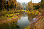 Idaho, North, Idaho Panhandle, Coeur d'Alene National Forest. The Little North Fork of the Coeur d'Alene River with fall colors and mountain mist on a wet autumn day.