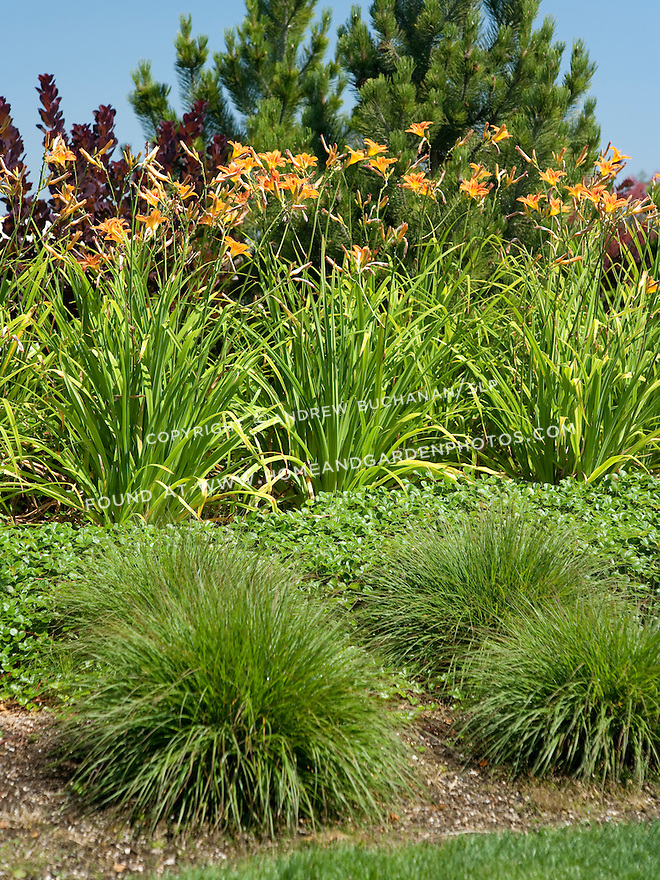 how to get rid of grass in daylilies