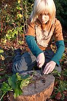 Gewöhnlicher Beinwell, Wurzeln und Blätter einer ausgegrabenen Pflanze werden kleingeschnitten, Symphytum officinale, Common Comfrey, Consoude officinale