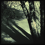 A tree in sunlight and shade
