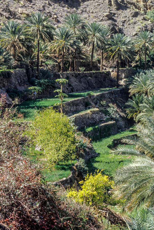 Wadi Bani Kharus, Oman.  Terraces for farming.