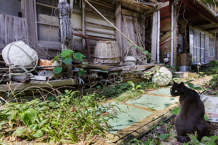 Aoshima, Ehime prefecture, September 4 2015 - Abandonned houses in Aoshima island. Due to Japan demographic problem and rural exodus, the population decreased from 800 residents in the 1960ies to 15 in 2015.<br /> Aoshima (Ao island) is one of the several &laquo; cat islands &raquo; in Japan. Due to the decreasing of its poluation, the island now host about 6 times more cats than residents.