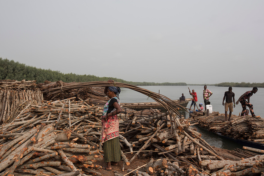 Ghana - Anyanui - A local woman carrying mangroove on her head. The cutting of mangroves for firewood has removed one of the most effective natural tools for protecting the coast, resulting in increased erosion in various parts of the coastline.
