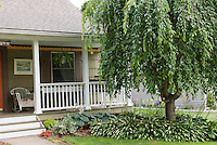 Front house entry curb apeal with pretty tree, lawn grass, front porch, flowers