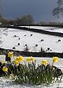 2016_04_26_snowy_alstonefield_sheep