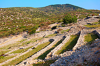 Ancient fields and olive groves above Cres Town, Cres Island, Croatia