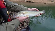 Northwest Arkansas Fish
