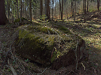 FOREST_LOCATION_90207