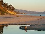 Gulls on East Beach in Santa Barbara