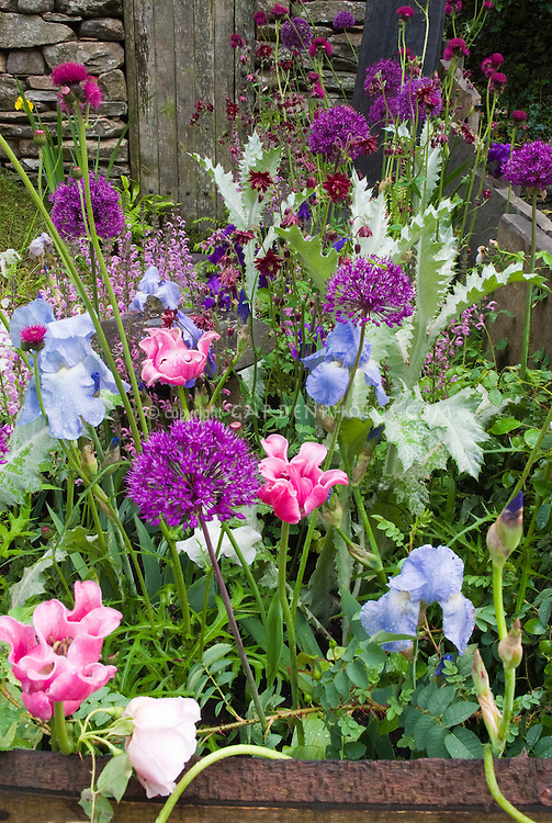 Bulbs Perennials Flowers In Purple And Blue And Pink