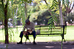Man sitting on a park, focus on the foreground leaves, Seville, Spain