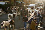 London Cob Horse dealers &quot;back end day&quot; sale. Its the last day of trading in the year. Battersea London UK