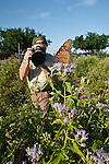 photographer photographing queen butterflies, Starr Co., Texas