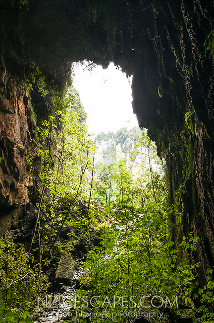 Punakaki limestone cave, Paparoa National Park, West Coast, Buller Region, New Zealand, NZ
