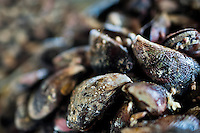 Mussels for sale are seen at Chorrillos seafood and fish market in Lima, Peru, 31 March 2013.