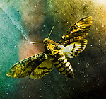 Creative image of a mounted moth.