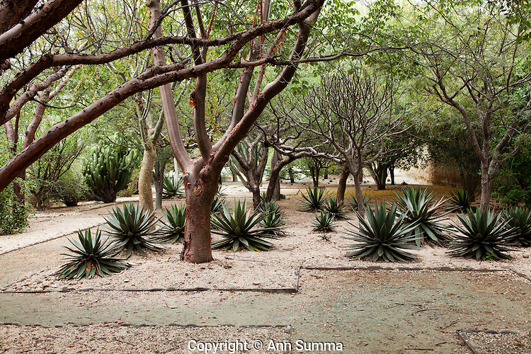 Jardin ethno botanico oaxaca mexico ann summa for Jardin oaxaca