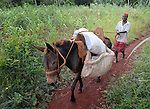 A woman walks with a donkey in Mizak, a small village in the southern mountains of Haiti. The United Methodist Committee on Relief (UMCOR) is working with some families in this village to help them improve their agricultural production.