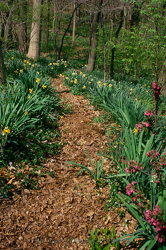 Path into woods from garden in spring, series, Midwest USA