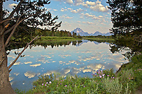 Wild rose, Mt. Moran, reflection, Oxbow Bend, Snake River, Grand Teton National Park