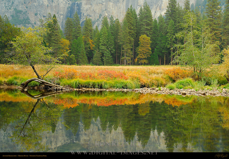Autumn Foliage Reflected on the Merced River near Cathedral Rocks, Yosemite National Park