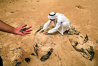 40 Km SouthWest of Kerbala, Iraq, May 27, 2003.A local sheperd uncovers bodies of victims killed in March 1991 during the Shia'i rebellion against Saddam's regime. The desert around Kerbala and Nedjaf hides many execution sites and massgraves; identification of the victims is often impossible due to poor recovering techniques..