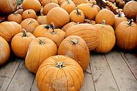 FRUITS - VEGETABLES<br /> Pumpkins<br /> Wahoe Valley, NV