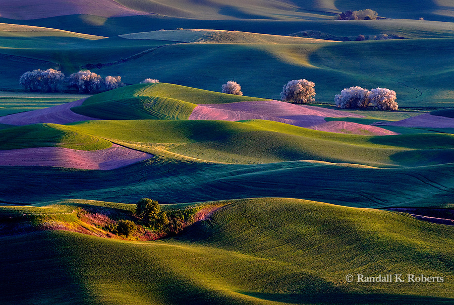 Sunrise warms the rolling hills of the Palouse Country in eastern Washington, USA