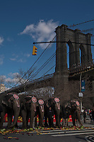 "Elephants eat fruits during ""Jumbo's coming to DUMBO"" where Asian Elephants dance in a party at brooklyn bridge to commemorate its inaugural show in Brooklyn. Photo by Eduardo Munoz Alvarez / VIEWpress."