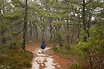 Walking through pitch pine forest on Cape Cod.